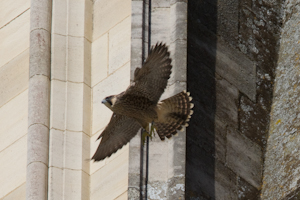 Female 42 taking to the skies