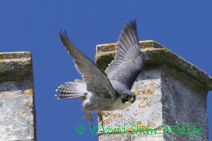 Dad leaves nest turret
