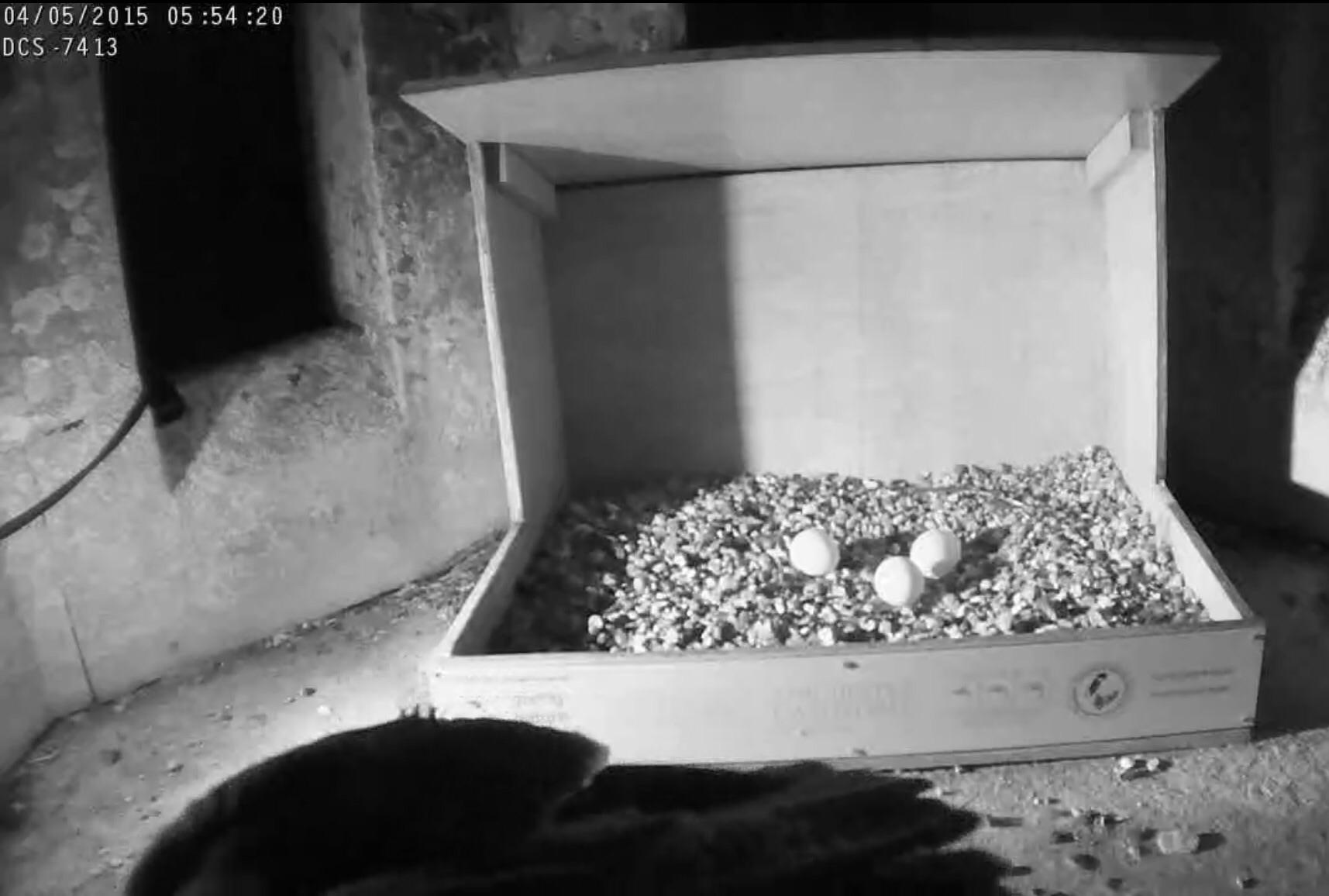 Three eggs!