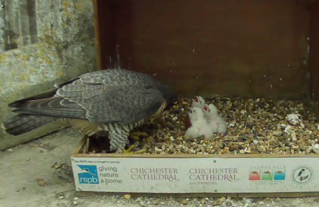 Mum feeding the three