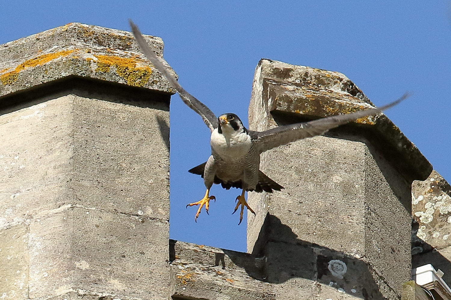 Dad exiting the nest turret