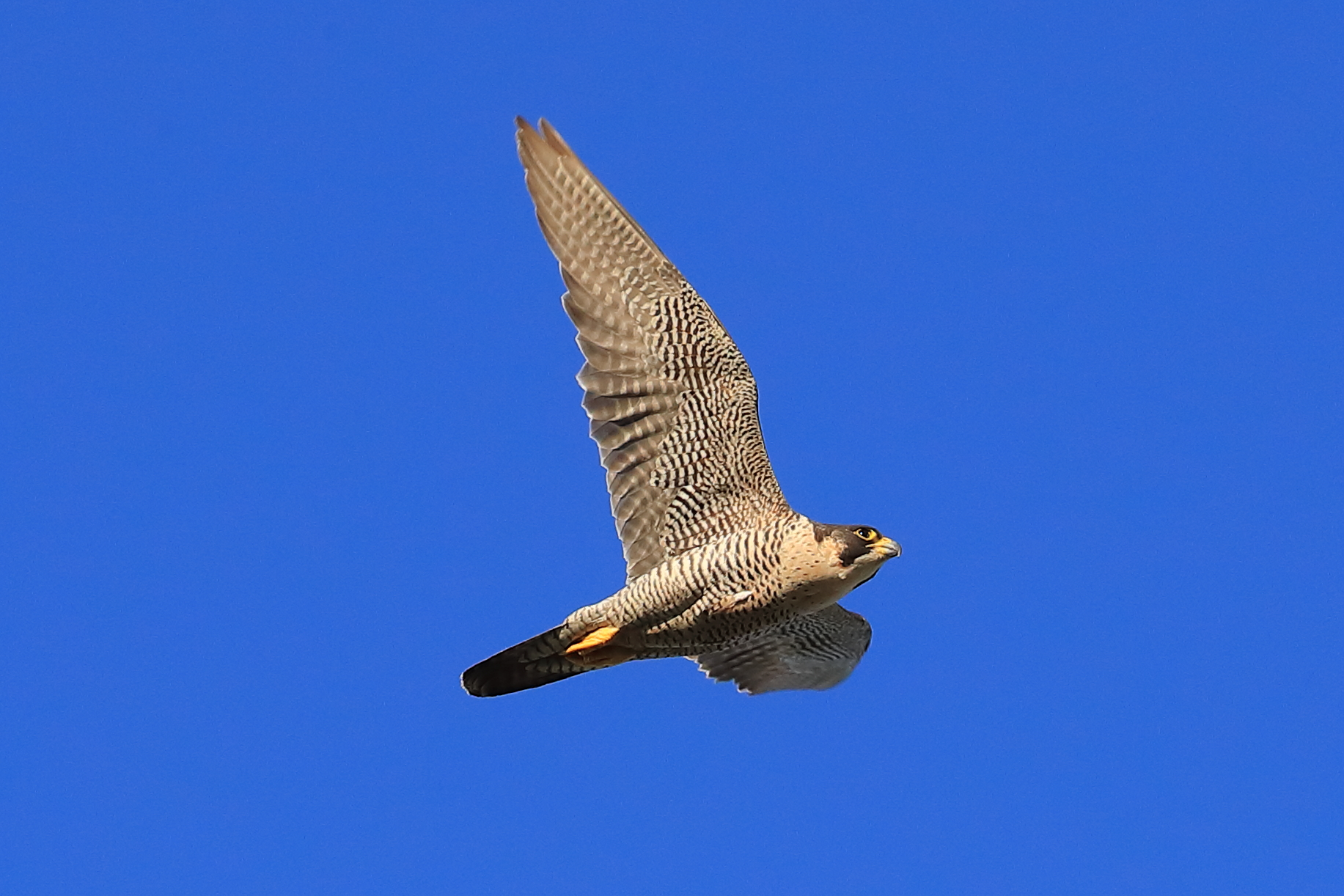 Supreme in the air by David Shaw